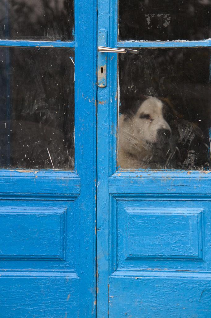 Ritratti,finestra, cane