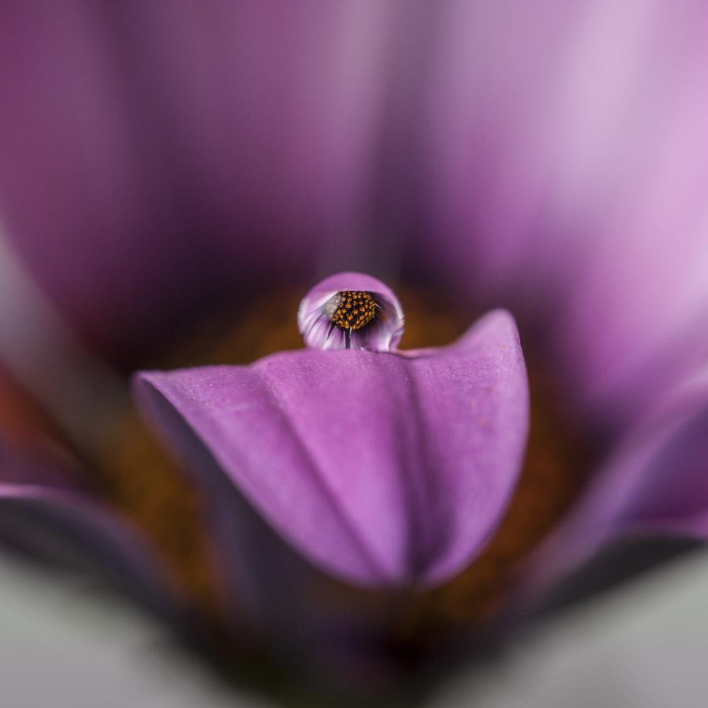 Still life,fiore, flower, la ricerca il viaggio, riflessi